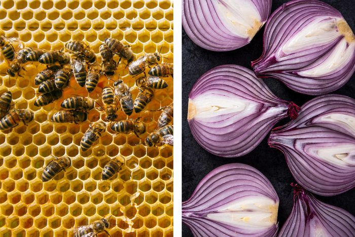 onions bees