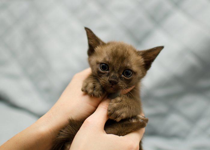 Little cute kitten