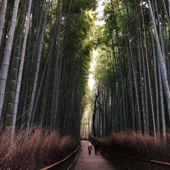 10 Photos That Will Make You Want to Visit Japan Right Now