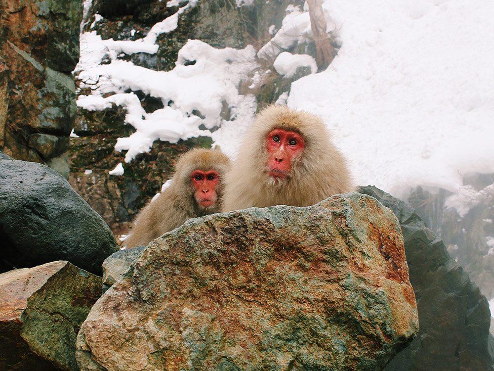 Snow Monkey Park, Nagano, Japan