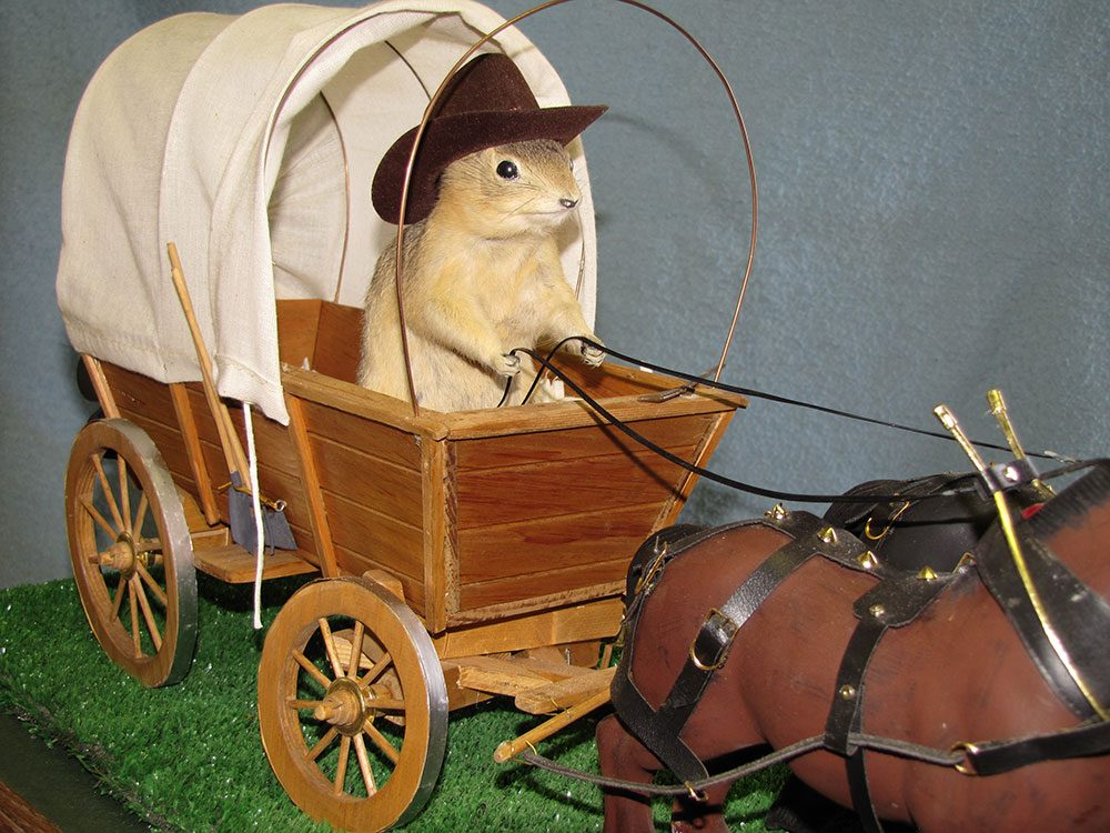 Roadside attractions across Canada - Gopher Hole Museum