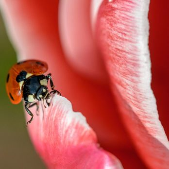 Word Power: How Well Do You Know Your Insect Terms?