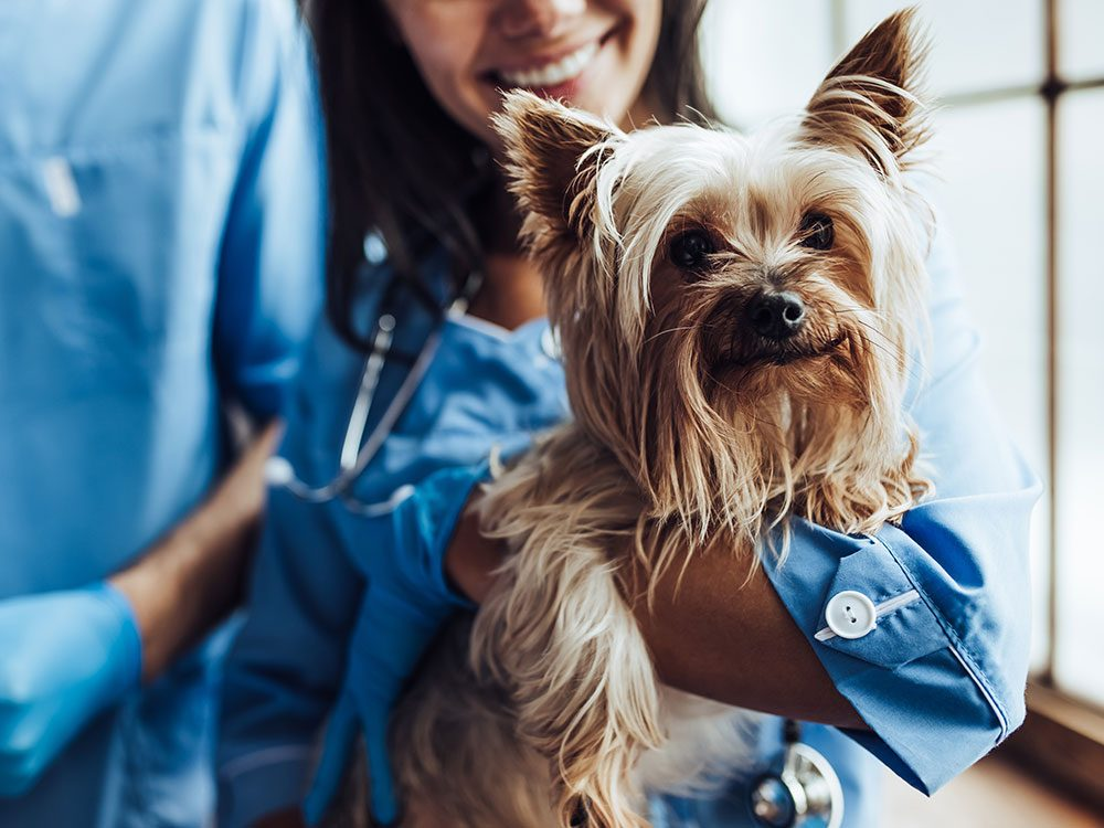 Boost your pet's life span with regular vet checkups