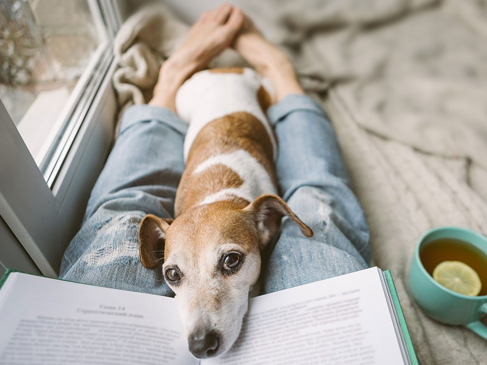 Does my dog love me - reading dog moods