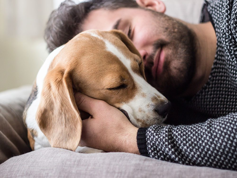 Does my dog love me - a dog's relationship with its owner changes over time