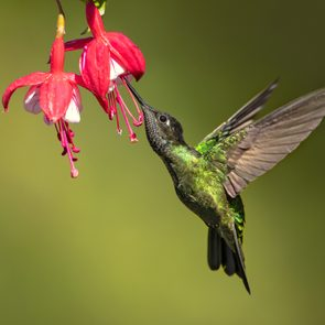 Hummingbird with bright flower