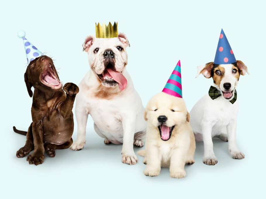 How to boost your pet's life span