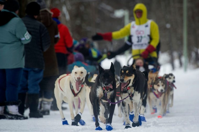 Iditarod, Anchorage, USA - 03 Mar 2018