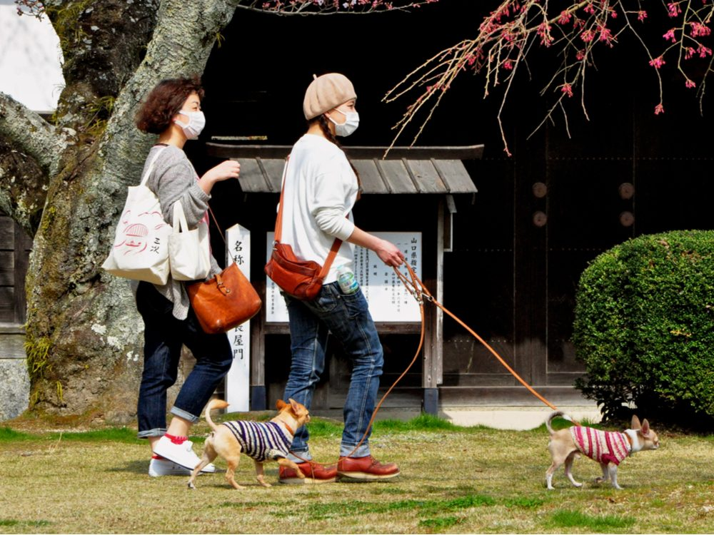Walking dog in Japan