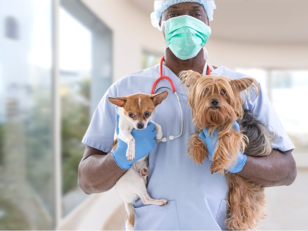 Veterinarian with small dogs