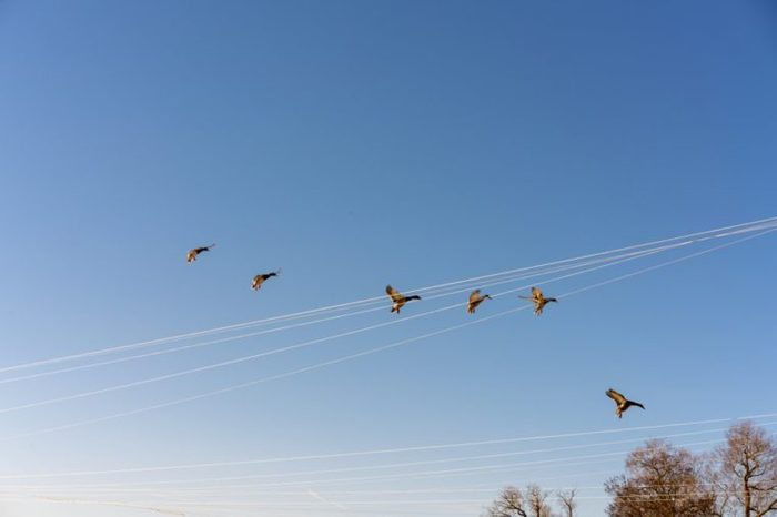 Flying ducks in the lakeside