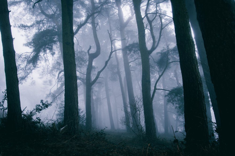 A spooky forest with trees silhouetted against the fog, edited similar to an Instagtram filter