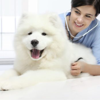 13 Pet Care Tips Your Veterinarian Wishes You Knew