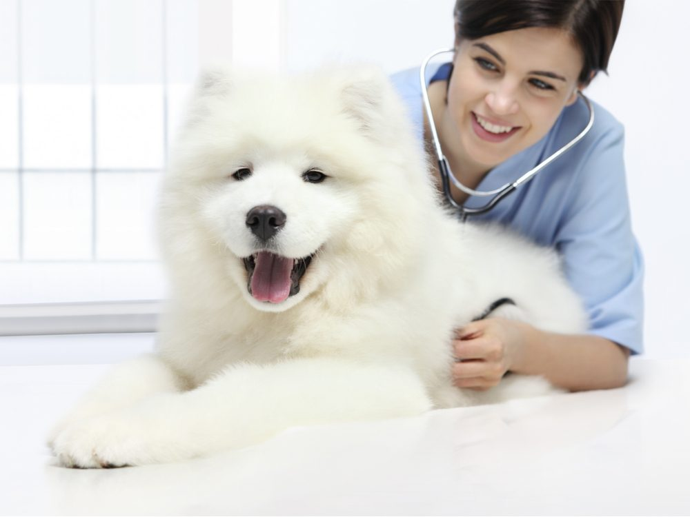 Veterinarian with white fluffy dog