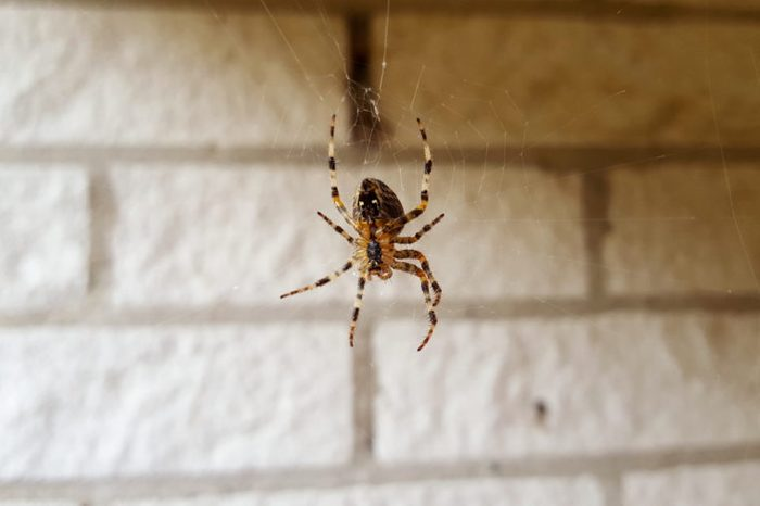 Scary spider watching the house. Zoom in and you will see all details of the spider.Nice to show to kids, too.