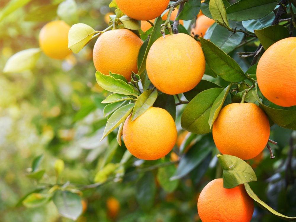 NFWM oranges