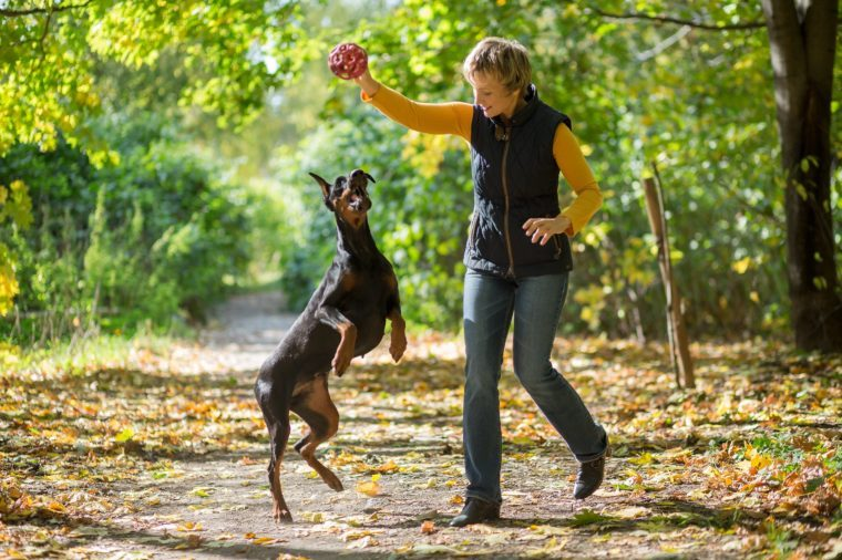 Smiling woman is playing with a dobermann in the forest.