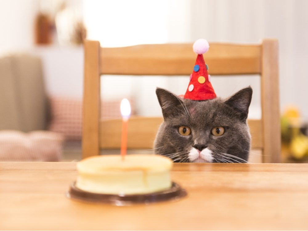 food tweets birthday cat
