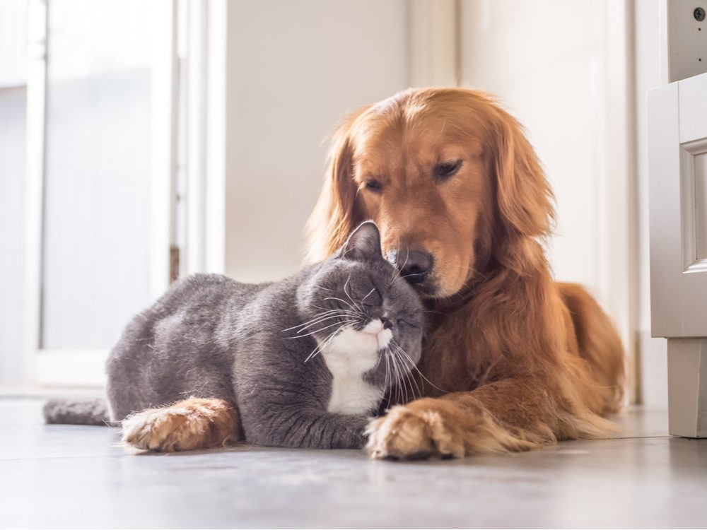 funny tweets cat and dog