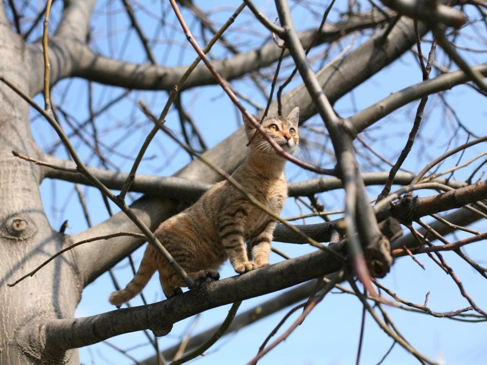 funny tweets cat tree