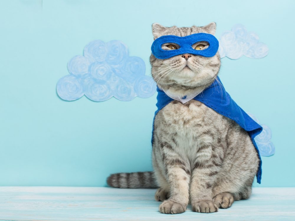funny tweets super cat