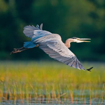 Photographing the Wildlife of the Laurentians From a Kayak