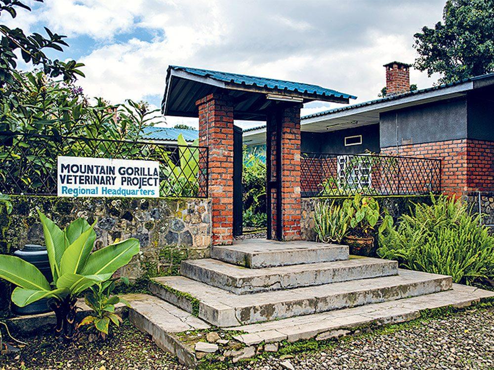 Gorilla headquarters