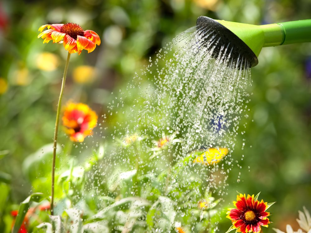 Watering plants in garden