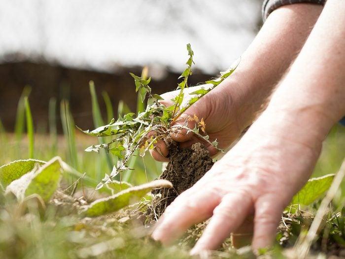 Starting a garden - weeding the garden