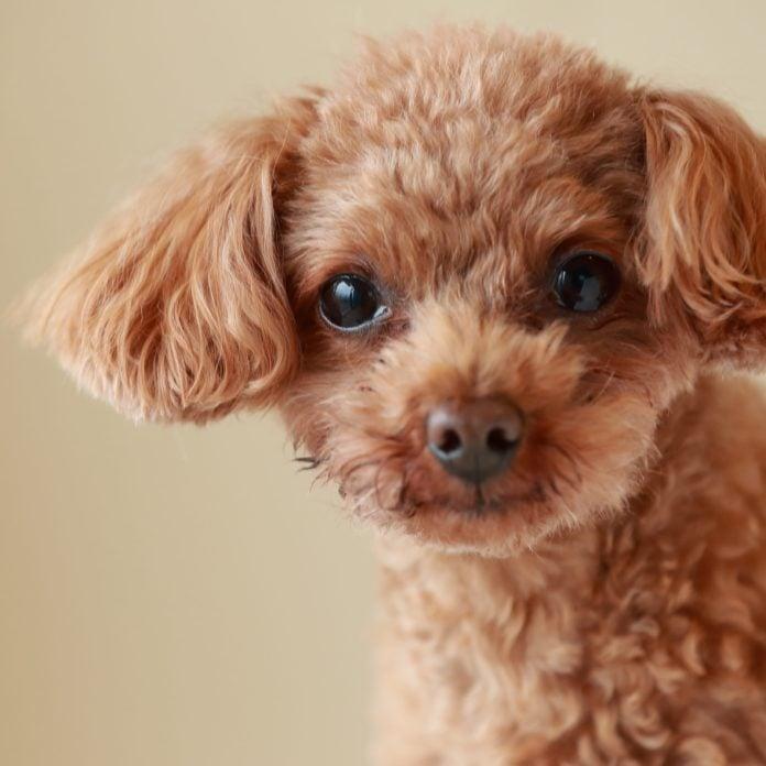The 20 Smartest Dog Breeds, Ranked