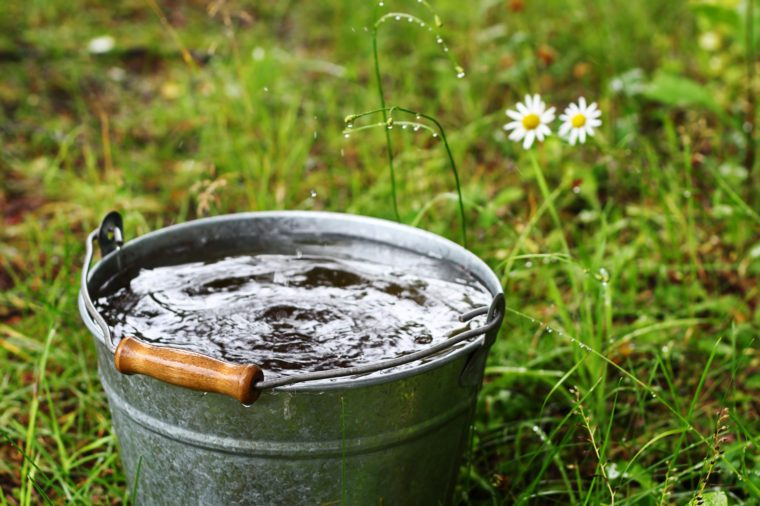 Bucket with rain water outdoors