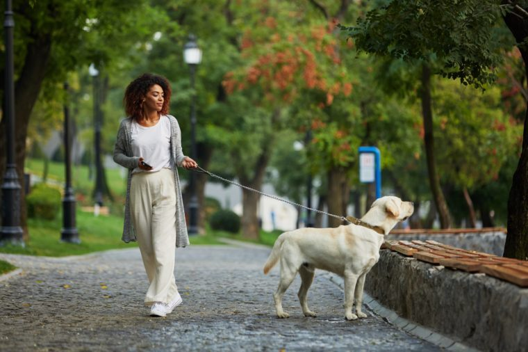 Pretty young african lady in white clothes walking with dog labrador in park in the morning