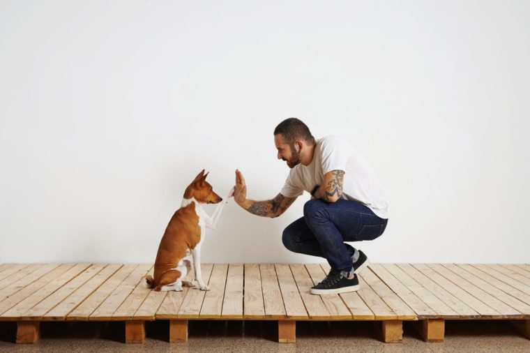 Owner trains his dog to give hive five