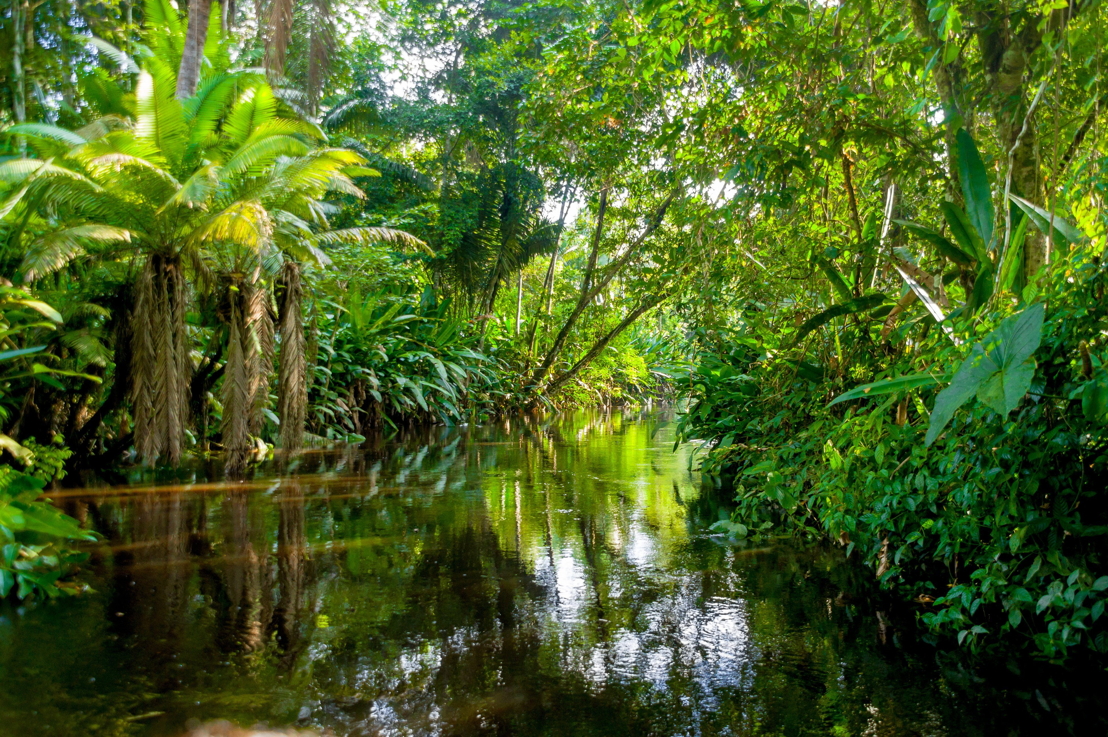 8 Things That Could Happen if the Amazon Rainforest Disappeared