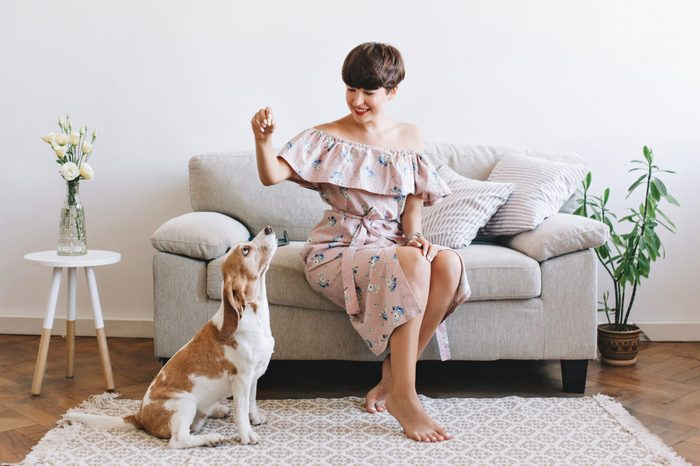 Attractive smiling girl wears retro dress posing in room decorated with vase and plant. Indoor portrait of amazing woman playing with beagle dog while it waits for food.
