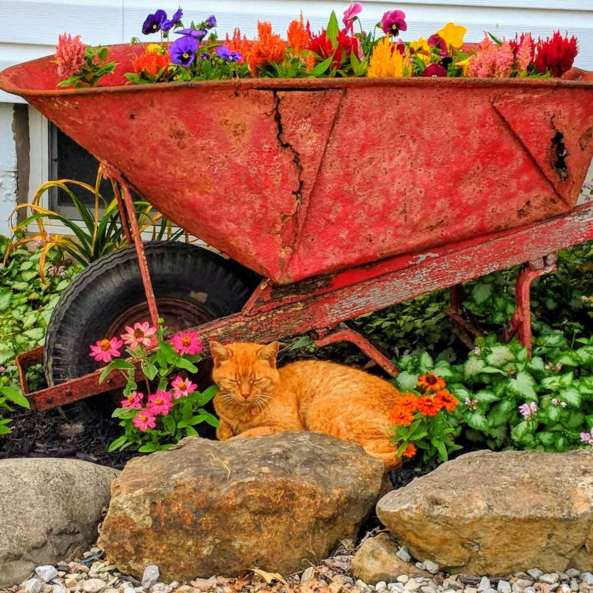 20 Brilliant Raised Garden Bed Ideas You Can Make In A: 24 Clever Repurposed Garden Containers