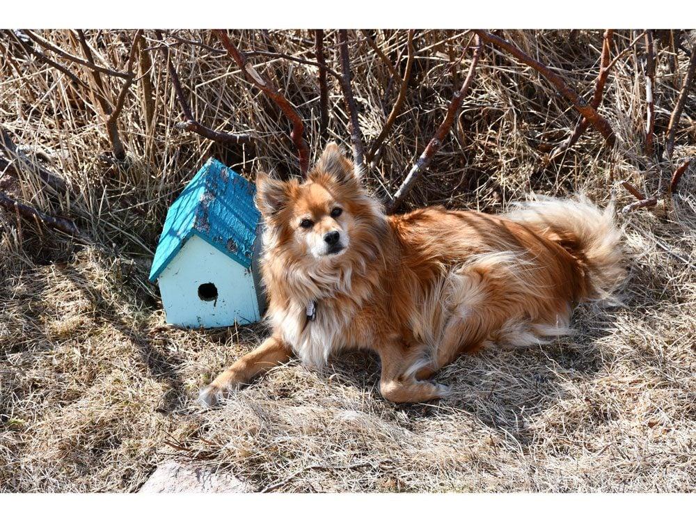 garden photography dog and bird house