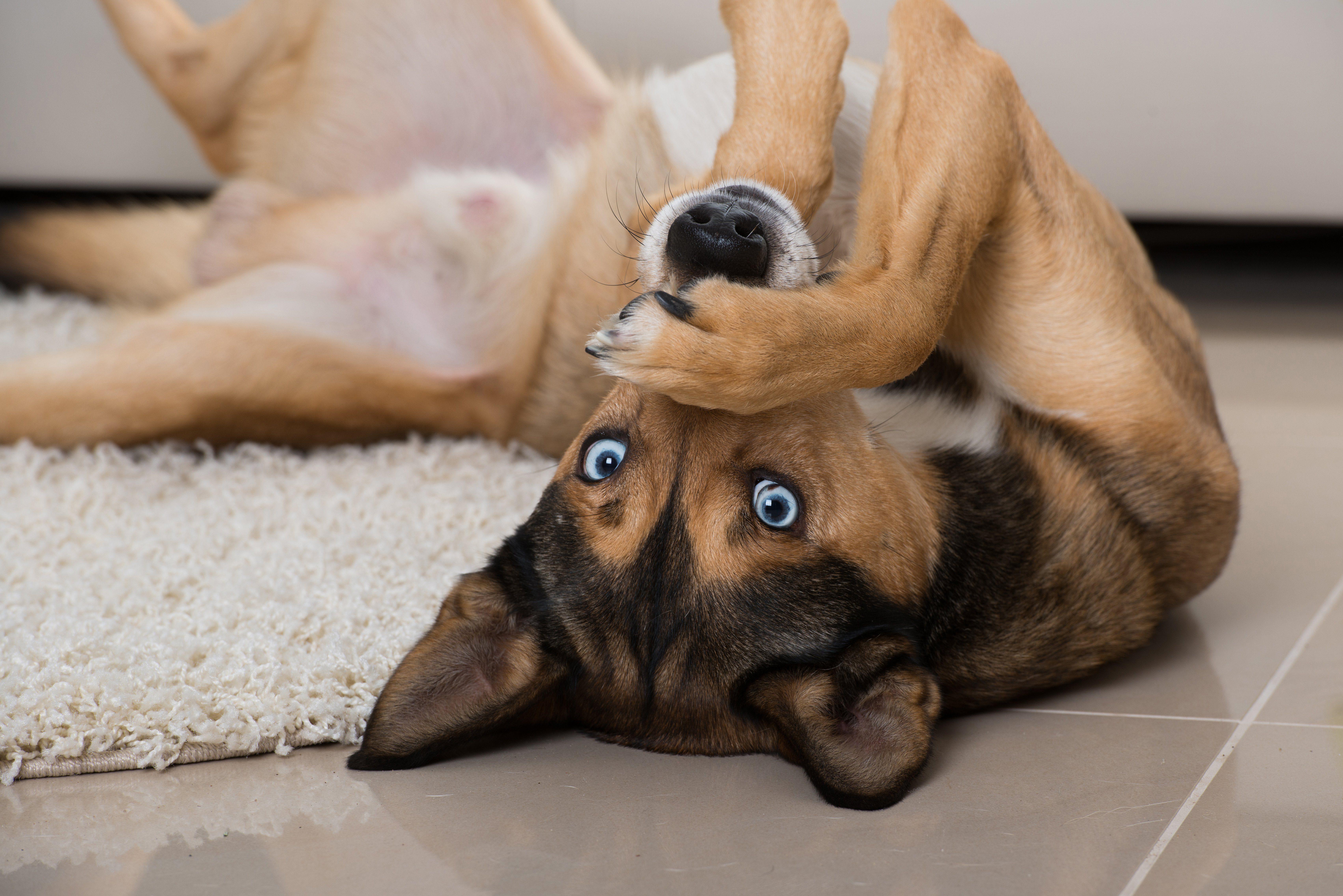 14 Reasons You Should Consider Adopting an Older Dog