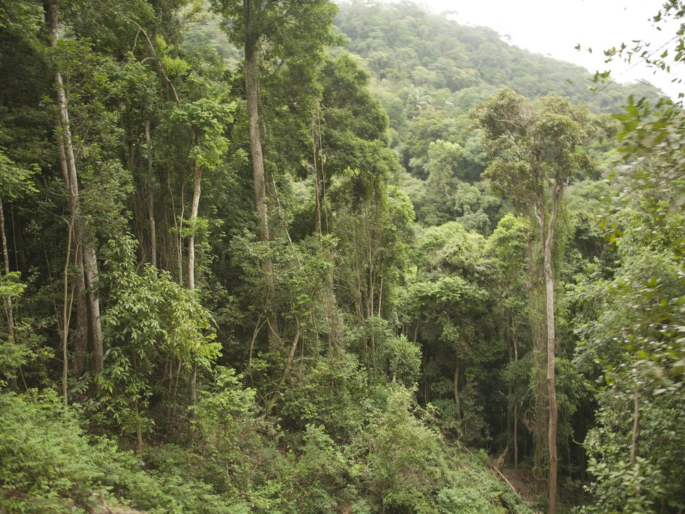 8 Things That Could Happen if the Amazon Rainforest ...