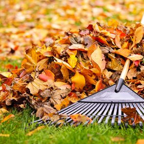 Dealing with leaves - rake and pile of leaves