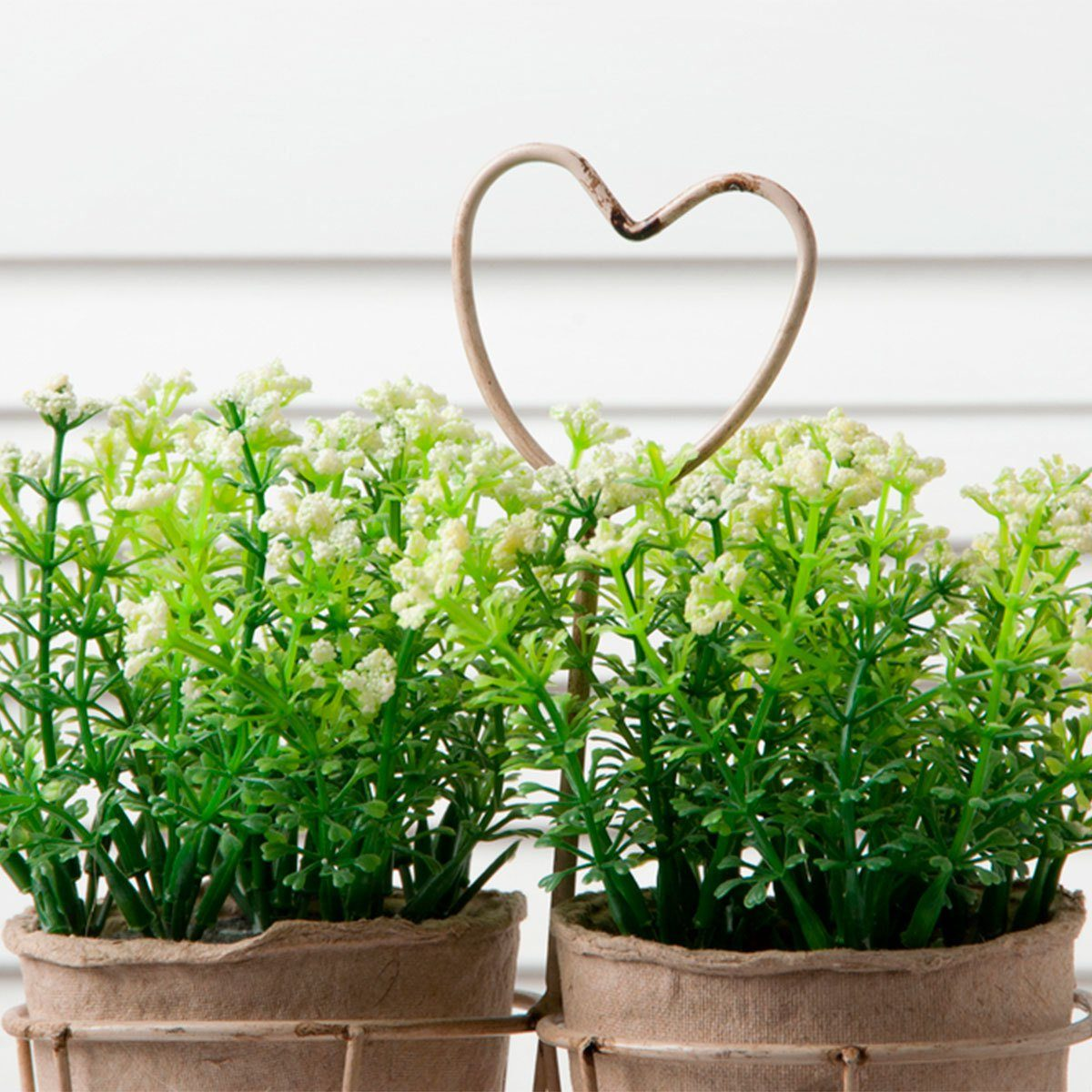 greenery plant