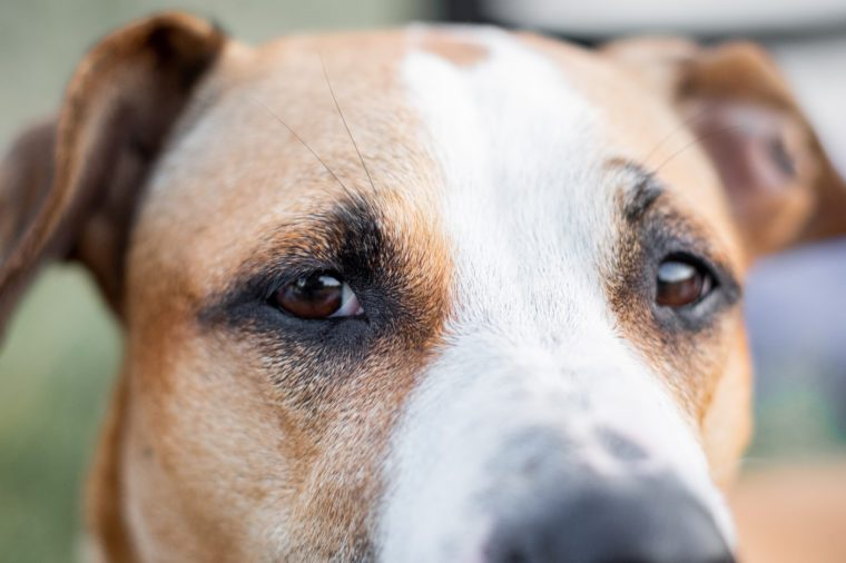 Close-up portrait of a dog, focused on the eyes. Macro view of dog's eyes outdoors in natural conditions, shallow depth of field