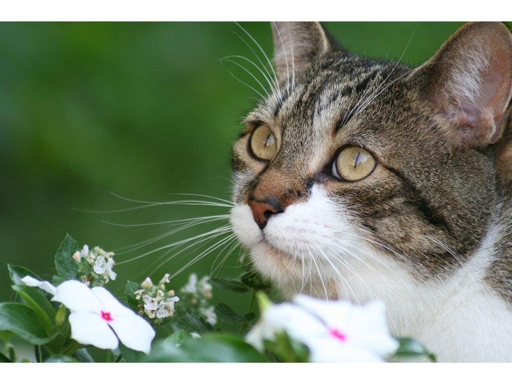 garden photography cat