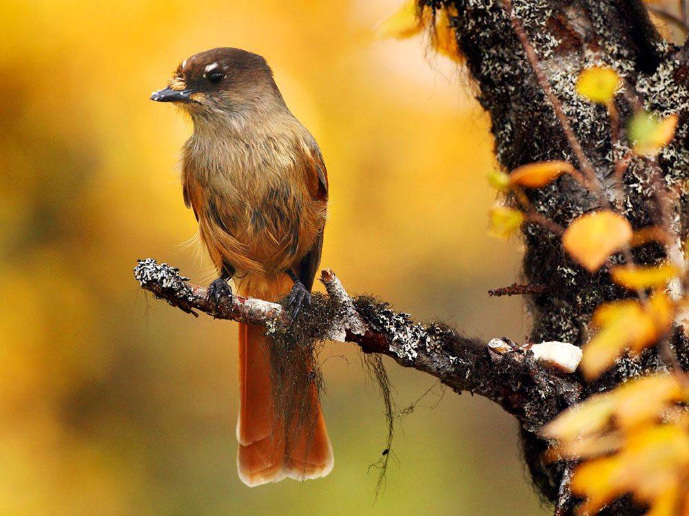 Fall backyard birding checklist