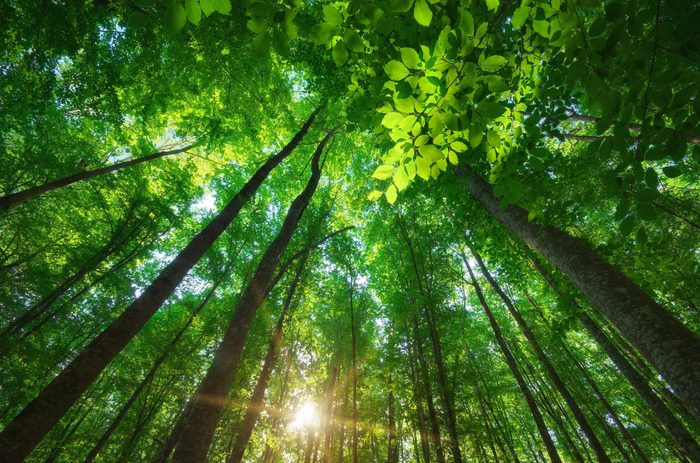 science quiz questions - Into the forest. Nature composition.