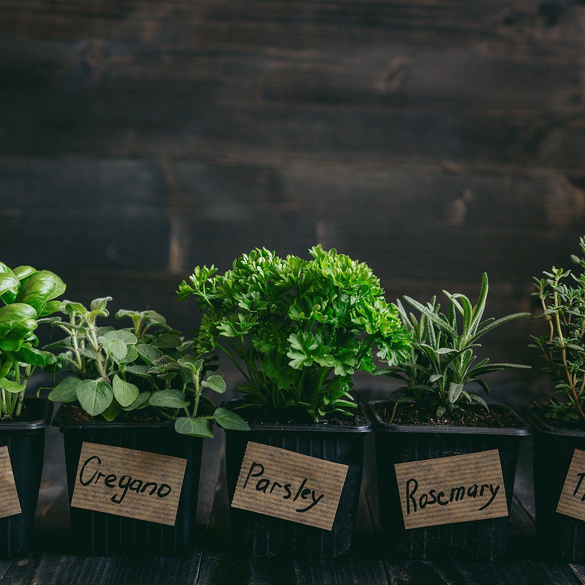 Fresh herbs on the wooden background
