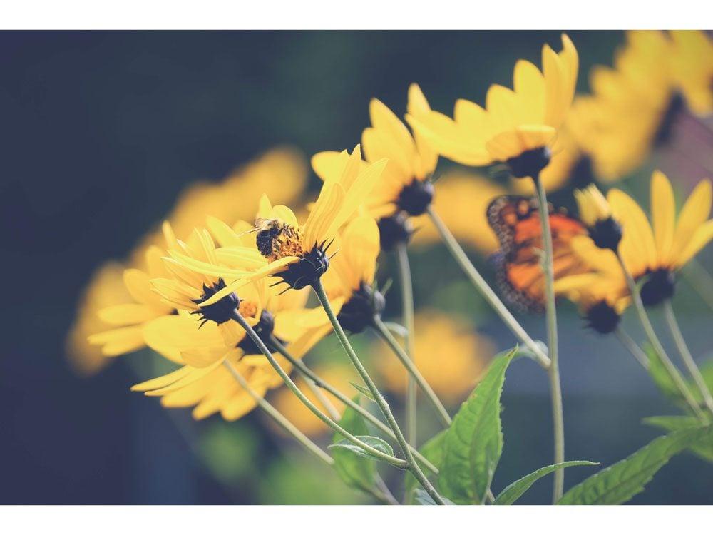 garden photography garden guardians