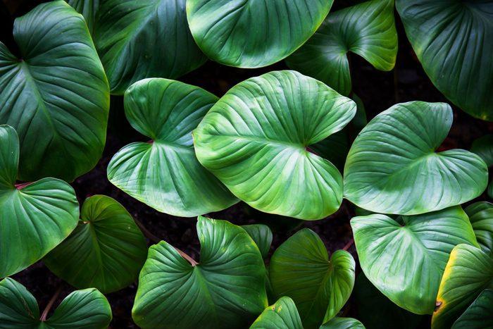 science quiz questions - Green plant