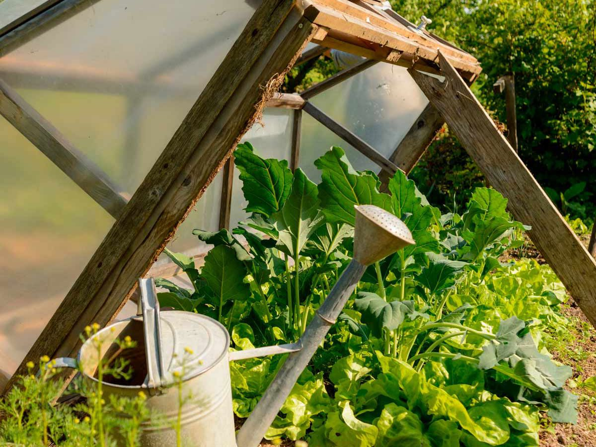 Build a cold frame to extend the season