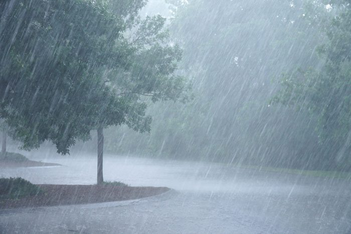 science quiz questions - heavy rain and tree in the parking lot